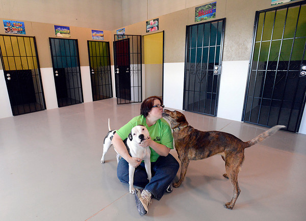 Debbie Gutierrez, owner of K-9 Island, a day resort, hotel and spa for dogs, plays with her pooches, Addie, left, and Sadie, right, at the dog day care in Loveland on Wednesday, March 13, 2013.