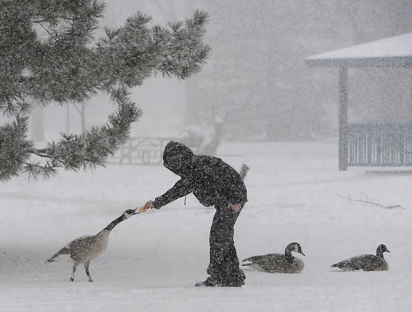 All bundled up, Dakota Adkins of Platteville, 11, feeds the geese at North Lake Park during a snowstorm in Loveland on Monday, March 4, 2013.