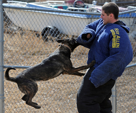 Loveland Police officer Steve Marchio trains with Shadow, the department's latest police dog, on Thursday, March 13 at the Loveland Police Department.