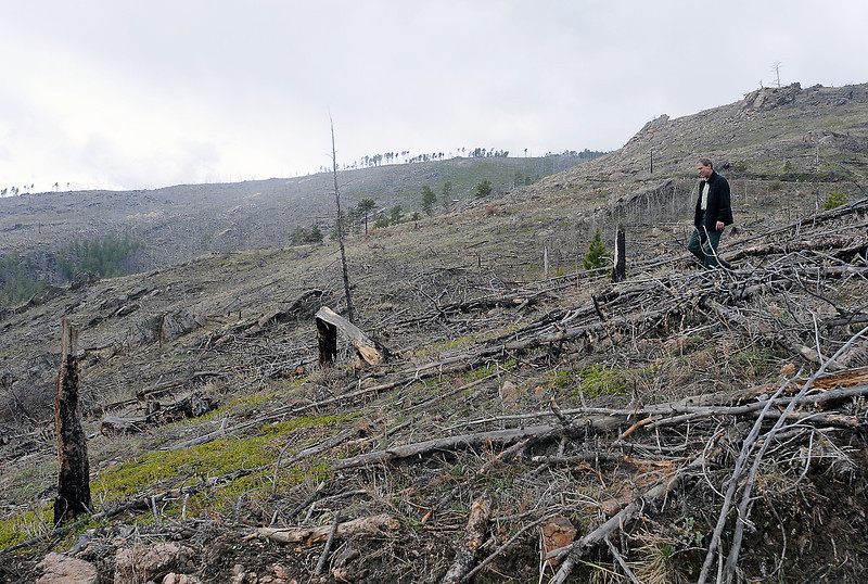 Richard Edwards, a member of the U.S. Forest Service's fire, fuels and timber team, walks through an area that was burned in the Bobcat Gulch wildfire that burned 10,600 acres ten years ago.