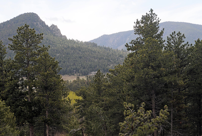 Trees cover the hillsides in the Storm Mountain area near Drake that was untouched by the wildfire that raged through the area 10 years ago.