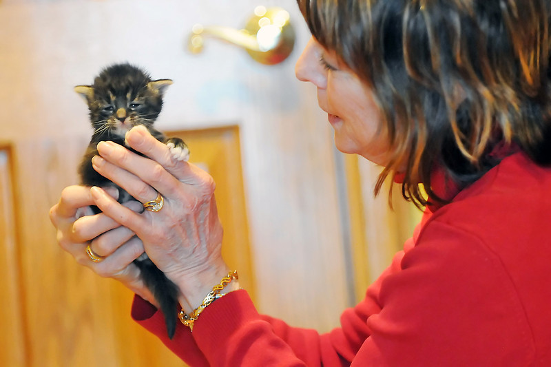Larimer Humane Society foster volunteer Susan Shattuck holds one of the kittens she's caring for at her Fort Collins home on May 1, 2011.