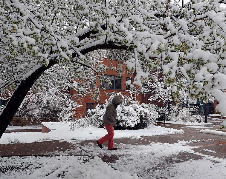 Belinda Delgado walks under snow covered trees at the Civic Center on her way to the Loveland Public Library in downtown Loveland on Wednesday, May 1, 2013.