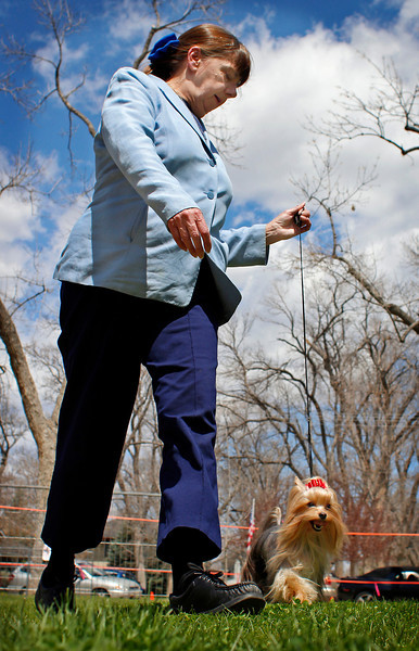 "Marty Krenek of Elizabeth, Colo., and her yorkshire terrier ""Gamber"" do a lap around the ring Sunday afternoon while participate in the Trail Ridge Kennel Club's 2013 Inaugural Multi-Breed Conformation Dog Show held at Fickel Park in Berthoud, Colo. Krenek has been showing dogs for 28 years and Gambler is her 18th Grand Champion dog, though the competition was still tough due in-part to the high participation levels of the club's first show."