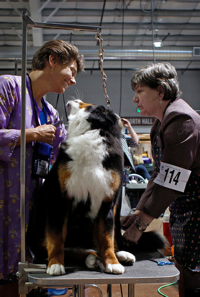"Kim Giannone, left, and Tracey Carpe groom their Bernese Mountain Dog, Lily, Tuesday morning before showing lily for conformation at the Bernese Mountain Dog Club of America's ""Rendezvous in the Rockies"" dog show at The Ranch in Loveland."