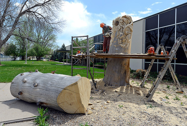 "With a 7 foot tall chunk of the tree stump that was trimmed off in the foreground, Faye Bratten, ""Chainsaw Mama,"" creates artwork out of a 10 foot tall blue spruce tree stump at the old Hewlett Packard building at 302 SE Third Street in Loveland on Thursday, May 16, 2013."