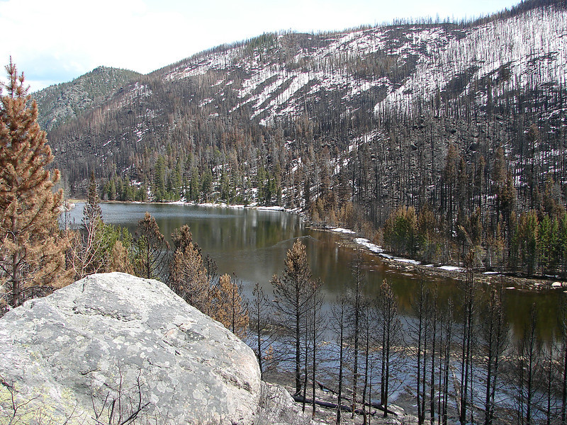 The shoreline of Cub Lake is a mosaic of burned trees and living ones in this view eastward from the Fern Lake Trail in Rocky Mounatin National Park on May 13, 2013.