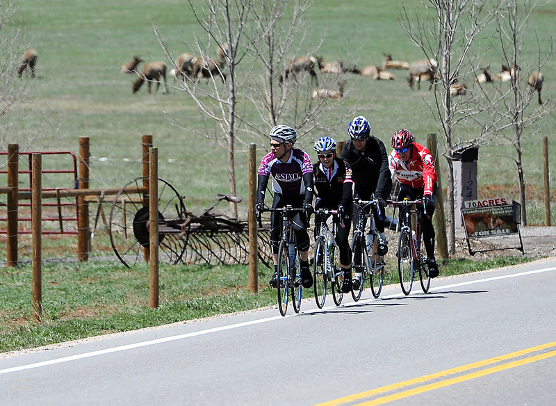 Cyclists ride past a herd of elk on Larimer County Road 29 south of Eisenhower Boulevard west of Loveland on Friday, May 3, 2013. From front to back are Jason Gugelman of Fort Collins, Deb Homan of Loveland, Sledge Hanner of Loveland and Bill Griffith of Loveland. All four say they are very excited to see the USA Pro Challenge international cycling event that will be held in northern Colorado this summer. Cyclists competing in the event will ride on this same stretch of road.