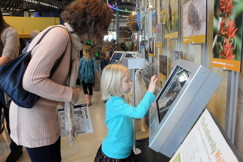 Savannah Boon of Fort Collins and her 5-year-old daughter, Allison, check out the natural history displays Saturday at the Fort Collins Museum of Discovery. (Photo by Craig Young)