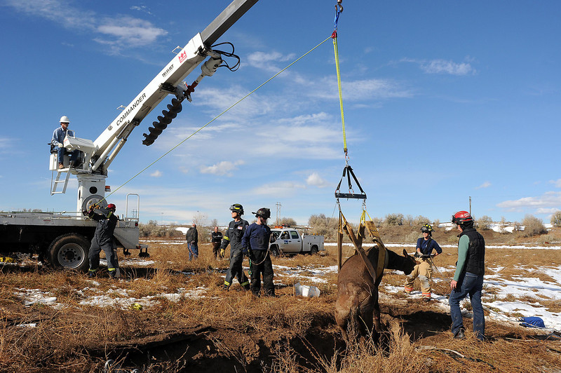Members of Loveland Fire Special Operations Unit lift a horse from a goose pit near a gravel pit at 4808 E. County Road 20E just south of Loveland Sports Park. Hunters found the horse and called 911 at 11:45 a.m. after they had been hunting on the property since about 8 a.m. The horse was sedated during the lift for the safety of the horse and the rescuers. The owner shot the horse after the veterinarian recommended to euthanize it.