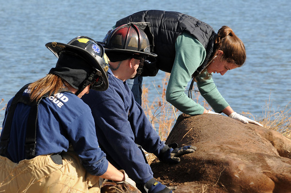 Veterinarian Ann Sellers examines a the horse after it was removed from a hole.Michael Cerovski, center, of the Loveland Fire Special Operations Unit and Gina Gonzales of the Technical Emergency Animal Rescue assist her.