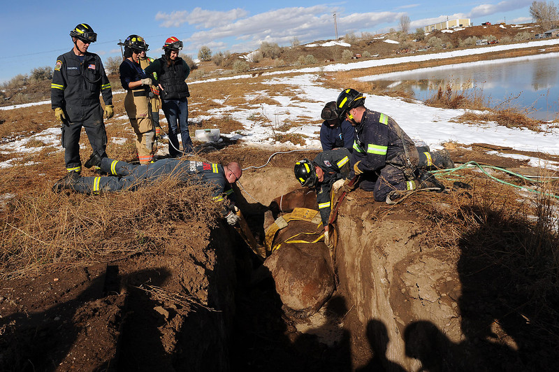 Members of the Loveland Fire Special Operations Unit and Thompson Valley EMS use a special harness designed by Lt. Cy Pollema during a horse rescue near a gravel pit at 4808 E. County Road 20E just south of Loveland Sports Park.