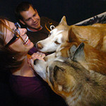 Lacy Jo Mirus is mobbed by her huskies while hiding treats in her hand as she and her husban Ryan play with the pooches at their home in Miliken Tuesday evening. From top to bottom they are Bubba, Copper and Juno. Their fourth husky Keller, not show, already got her treat.