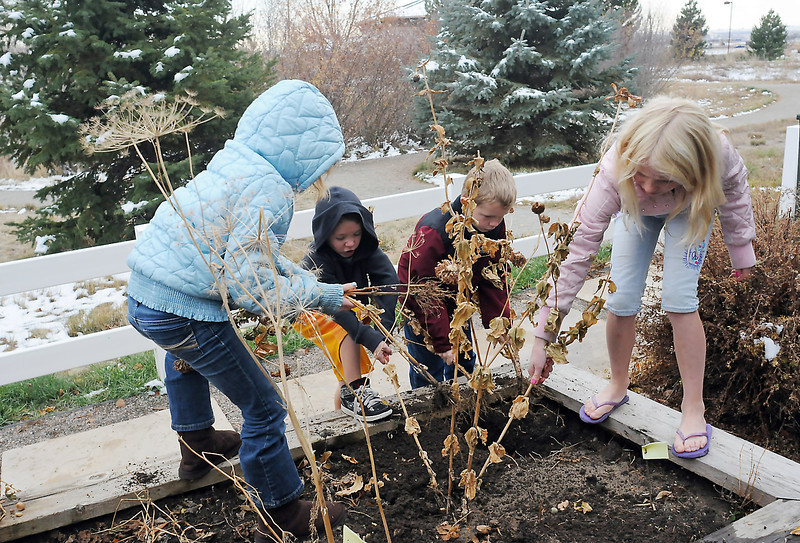 Youngsters clean out dead plants Saturday, Nov. 13, 2010 in a planter outside the Environmental Learning Center during a Green Adventures class put on by the Loveland Youth Gardeners.