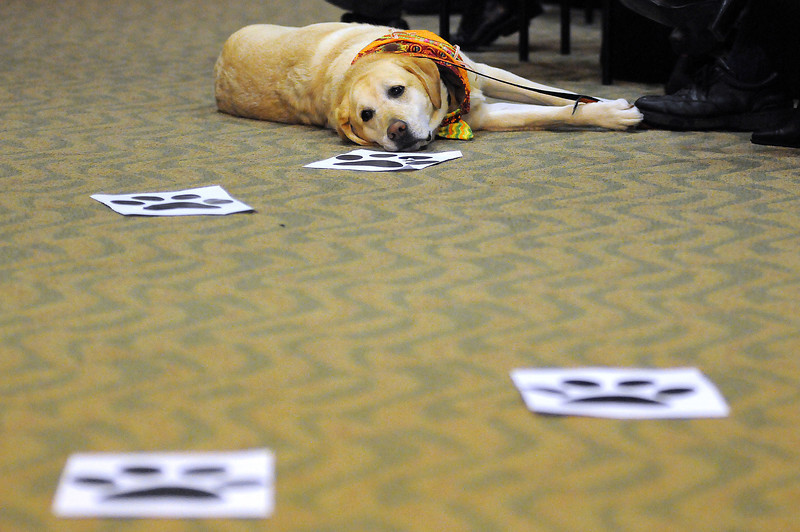 A therapy dog named Phoebee Dawn, owned by Amy Fristoe of Wellington, waits to be blessed during the Blessing of the Paws event at the Medical Center of the Rockies. The paw prints marked the way to the event in the hospital's lobby.