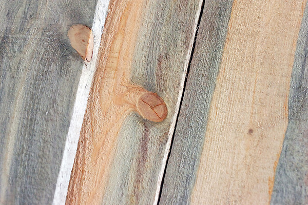 Lumber from beetle-killed pine trees exhibits blue coloration which occurs when mountain pine beetle larvae transmit blue-stain fungi, which contaminates the bodies of adult beetles.