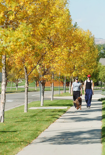Fort Collins resident Adam Huryta, left, and Jonathan Jorgensen of Loveland take an autumn walk with Huryta's dog, Samantha, past a row of trees on Monday in southwest Loveland along the 200 block of Crestone Drive.