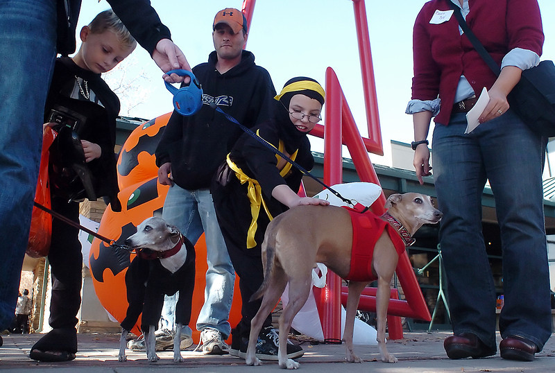 From left Ashton Cobaugh, 6, Rusty Cobaugh and Logan Cobaugh, 9, interact with several miniature greyhound dogs in front of the Loveland Museum/Gallery on Saturday while members of the group Italian Grehounds of Colorado pass out flyers with information about a missing dog in Loveland that they hoped to find.