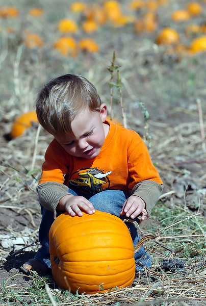 Two-year-old Tobin Prebish chooses a pumpkin Saturday during Osborn Farm Market Days.