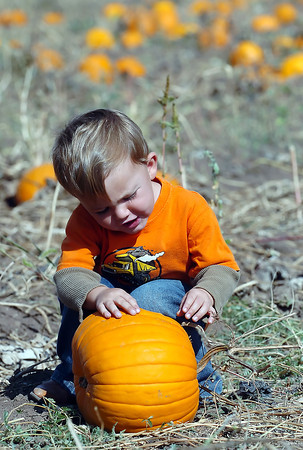 Two-year-old Tobin Prebish chooses a pumpkin Saturday during Osborn Farm Market Days.