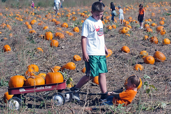 Two-year-old Tobin Prebish tries to pull his wagon while choosing pumpkins with his brother, Tyler, 9, on Saturday during Osborn Farm Market Days.