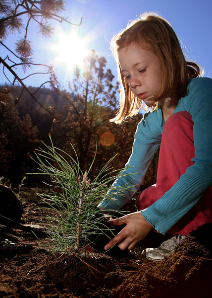 Sadie Walton, 10, from Fort Collins, waters a ponderosa pine tree she planted inside a burn area Saturday morning in the Lower Narrows Campground along the Poudre River. Seeds for the trees originated within a couple of miles of the campground, cones collected were sent to the Charles E. Bessey Tree Nursery in Halsey, Neb., the oldest Forest Service nursery in the system, and propagated for two years to provide viable plants capable of thriving in the area.