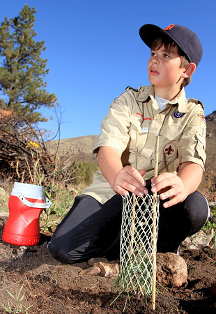 Ethan Lundmark, 11, from Loveland Boy Scout Troop 487, places a protective screen around a newly planted ponderosa pine Saturday morning in the Lower Narrows campground along the Poudre River as volunteers participated in National Public Lands Day.