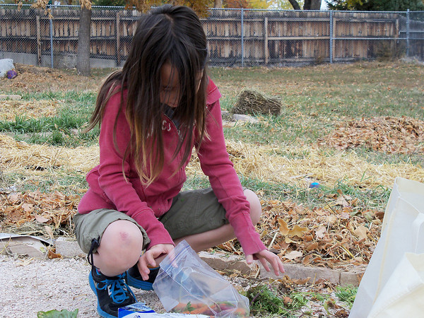 Fourth-grader Jenna Kramer, 9, bags up carrots from the School/Neighorhood Garden at Van Buren during a garden cleanup day earlier this month.