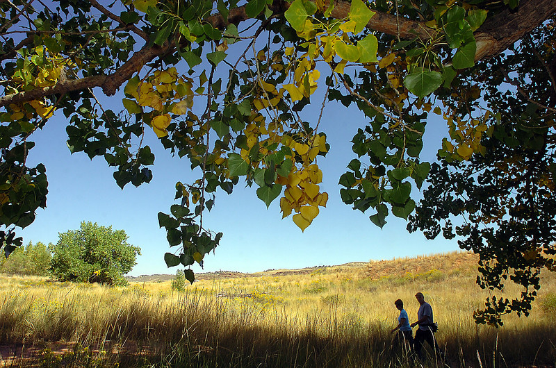 Leaves on a cottonwood tree start to change color as Tom and Nancy Rupli of Ottawa Lake, Michigan, hike on the trail at Devil's Backbone Open Space in Loveland.