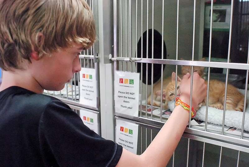 Loveland resident Alexander Randolph, 13, plays with some kittens Thursday at the Larimer Humane Society, 6317 Kyle Ave., while he and his mother, Elizabeth, not pictured, look for a cat to adopt.