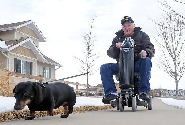 "Charles Gates and his 10-year-old miniature dachsund, Chipper, go for a walk together Thursday afternoon along Georgetown Drive near their home in northwest Loveland. Gates said he likes to take Chipper for walks when it isn't too cold out and joked, "" He pulls me along like a sled dog."""