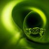 Spiny Cochran frog (Teratohyla spinosa)