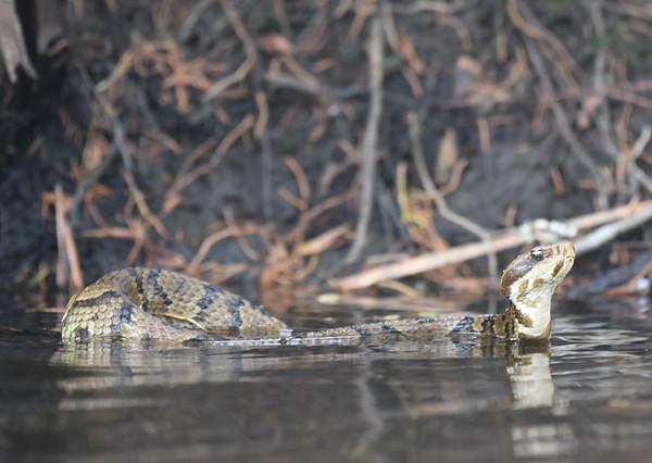 Reptiles, Amphibians, and Crustaceans
