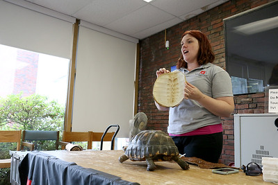 Reptiles at Fitchburg Public Library