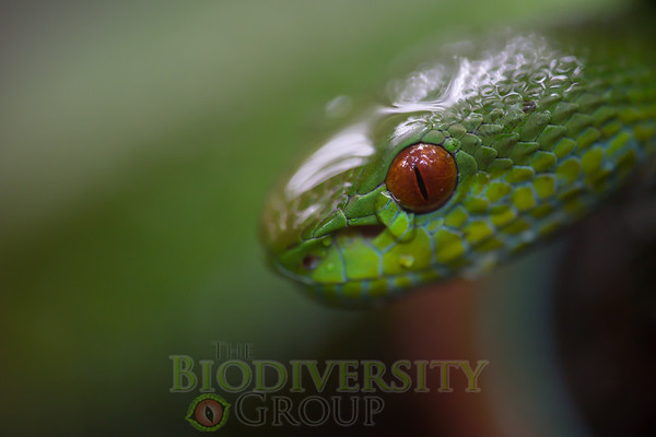 Biodiversity Group, _DSC3895