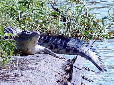 Gooseponds Croc