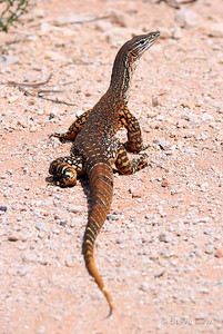 Gould's Monitor