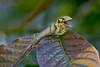 Biodiversity Group, _DSC4751