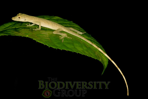 Biodiversity Group, _DSC0301