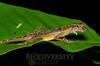 Biodiversity Group, DSC_0441