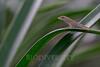 Biodiversity Group, DSC03289