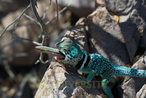 Biodiversity Group, Bahia Kino-0093