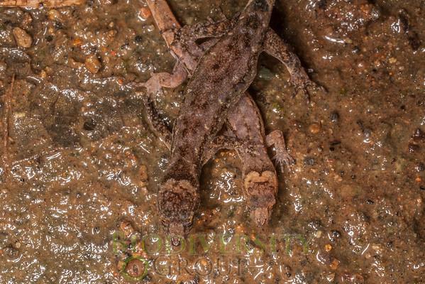 Biodiversity Group, IMGP4129