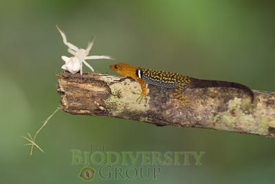 Biodiversity Group, _MG_8484