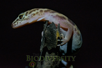 Biodiversity Group, _DSC6673