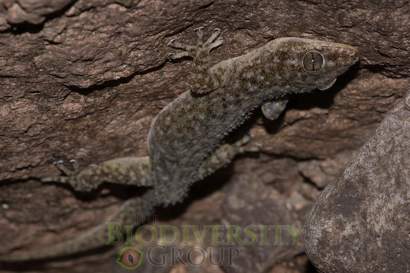 Biodiversity Group, DSC03823