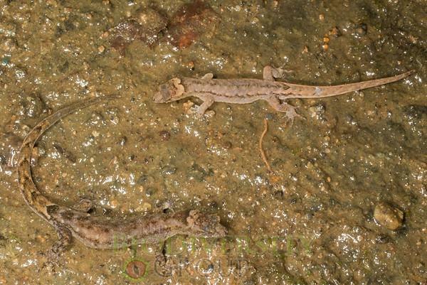 Biodiversity Group, IMGP4128