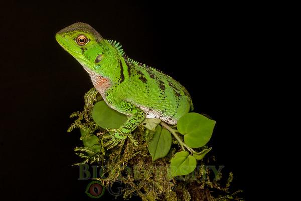 Biodiversity Group, IMGP8639