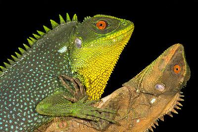 Biodiversity Group, DSC01125