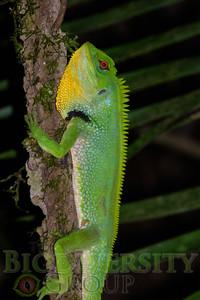 Biodiversity Group, _DSC5552